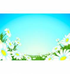 Summer chamomile meadow vector