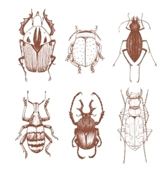 Nice hand drawn beetles vector