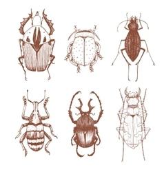 Nice hand drawn beetles vector image