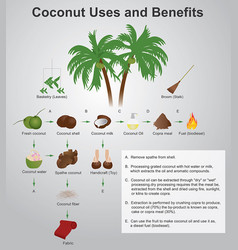 Coconut uses and benefits vector
