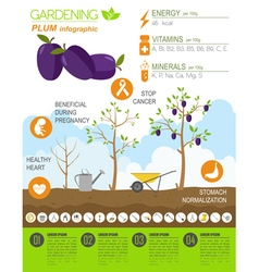Gardening work farming infographic plum graphic vector