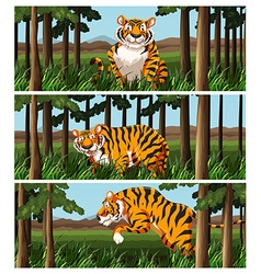 Wild tiger living in the jungle vector