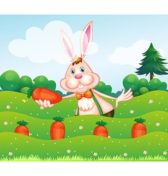A rabbit holding a carrot at the garden vector image vector image