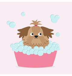 Little glamour tan shih tzu dog taking a bubble ba vector