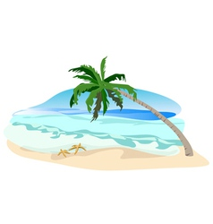 beach palms vector image