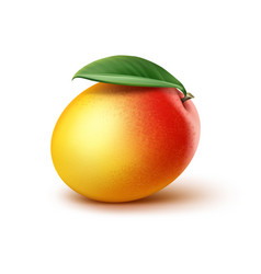 Mango with leaf vector
