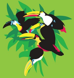 toucans in palm leaves vector image