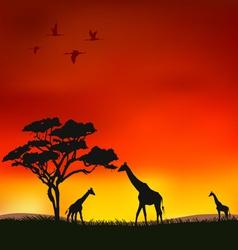 giraffes vector image