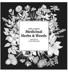 square banner with medicinal flowers and herbs on vector image