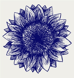 Sunflower sketch vector image vector image