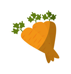 vegetable carrot cartoon vector image
