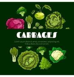 Cabbage vegetable poster for food design vector image