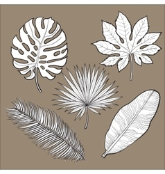 Set of tropical palm leaves sketch style vector