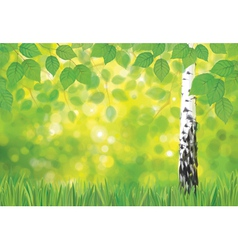 Spring birch landscape vector