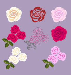 set of rose flowers vector image