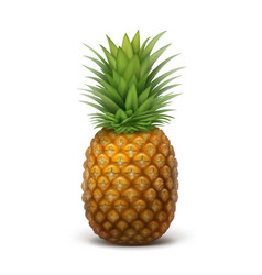 Whole ripe pineapple vector
