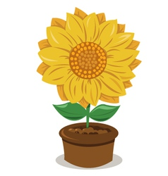 Sunflower in a pot vector