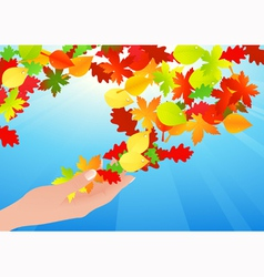 Autumn leaf in human hands vector