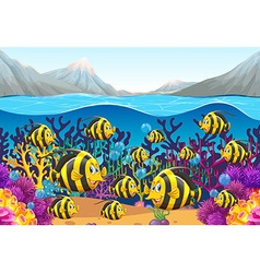 Scene with fish swimming under the sea vector