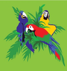 parrot macaws in palm leaves vector image