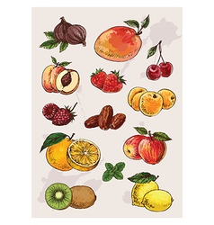 Collection of hand drawing isolated fruits vector