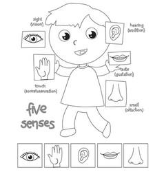 Five senses boy coloring vector