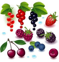 Collection berries vector