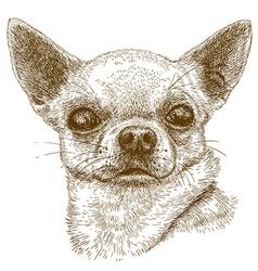 engraving chihuahua vector image vector image