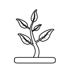 Plant with leaves in soil icon imag vector