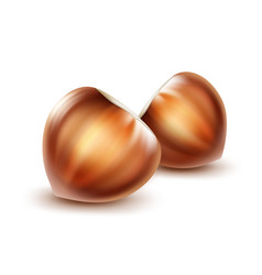 Two unpeeled hazelnuts vector