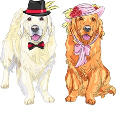 hipster pair of dogs labrador vector image vector image