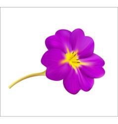 Violet spring flower vector image