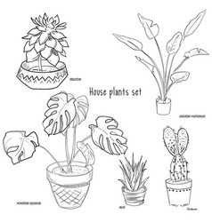 house plants drawing. houseplants set of hand drawing vector image house plants