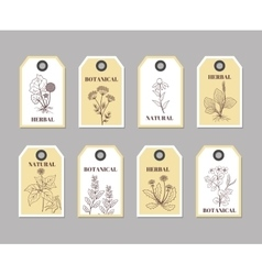 Organic herbs labels for natural products and vector