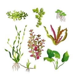 Aquarium plants set Cartoon underwater algae vector image