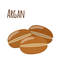 argan fruit herbal cosmetics eco therapy natural vector image vector image