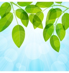 Background with foliage vector image vector image