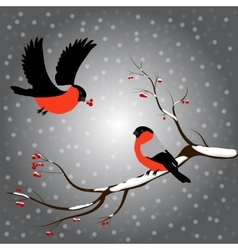 Bullfinch on rowan branch snow merry christmas vector