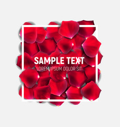 Abstract natural rose petals with frame background vector