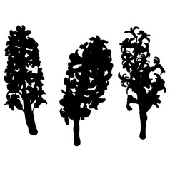 hyacinth silhouettes vector image vector image