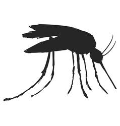 mosquitoe vector image vector image