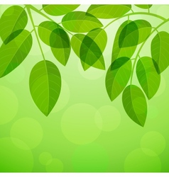 Background with foliage vector
