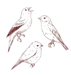 Nice hand drawn birds vector image
