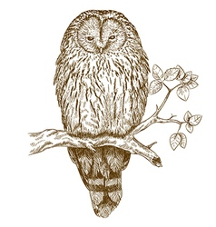 Etching owl vector
