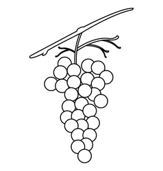 grapes vector image vector image