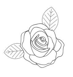 Rose line drawing image vector