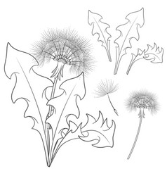 set of images with a dandelion vector image