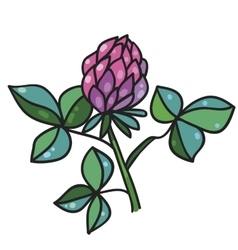Flower of clover vector