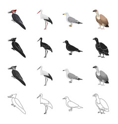 Forest bird woodpecker stork seagull vulture vector