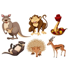 Set of wild animals vector